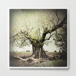 Split Tree, Flint Hills, Kansas Metal Print