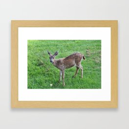 Young buck on the lawn Framed Art Print