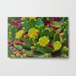 Prickly Pear Cactus Metal Print