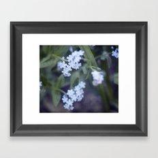 Forget-me-not Framed Art Print