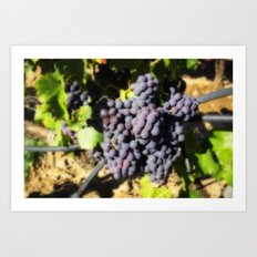 August Grapes Art Print