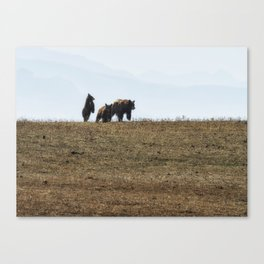 Standing Cinnamon Black Cub with mother and sibling at Pryor Mountain Canvas Print