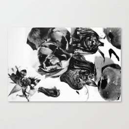 He loves me, He loves me not Canvas Print