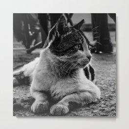Istanbul Cats Metal Print