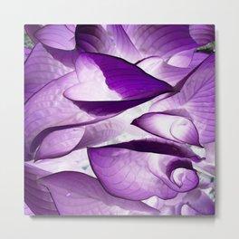 Flower   Flowers   Purple Spring Hostas    Leaves Metal Print