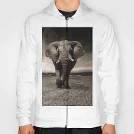African Elephant Photographic Print Hoody