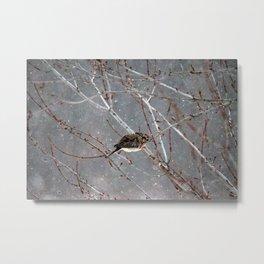 Mourning Dove Asleep in Snowfall Metal Print