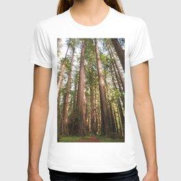 Redwood Forest Photography, Northern California Humboldt County Art, Magical Enchanted Woodland, Landscape Home Decor, Coastal Redwoods T-shirt