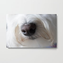 Sweet Little Sniffer Metal Print