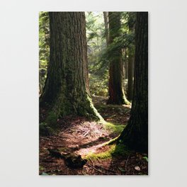 Where the Light Shines Through Canvas Print