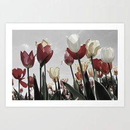 Tulip flowers Art Print