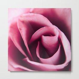 Pink Rose Close Up Metal Print