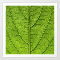 green leaf structure XII Art Print
