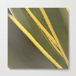 Agave cactus succulent leaves pattern Metal Print