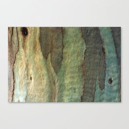 Eucalyptus Tree Bark 6 Canvas Print