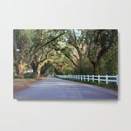 Old South Live Oaks Metal Print