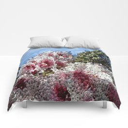 CB Comforters