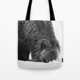 Alaskan Grizzly Bear in Snow, B & W - 2 Tote Bag