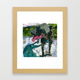 Bolo the Pittie Framed Art Print