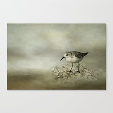 Sanderling Canvas Print
