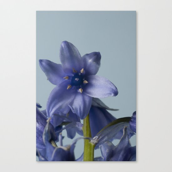 Bluebell Close Up Canvas Print