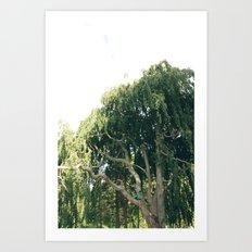 living in a tree Art Print