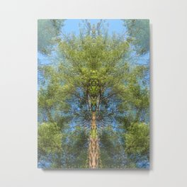 Grandmother Pine Metal Print
