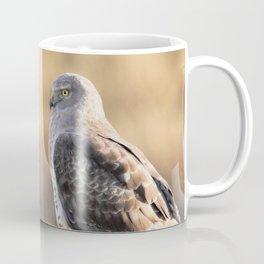 Sunlit Profile of a Northern Harrier Hawk on Driftwood Coffee Mug