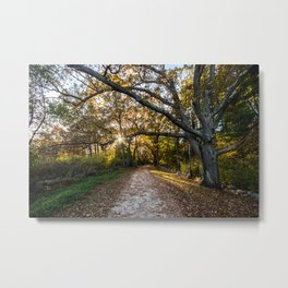 Star of Fall Metal Print