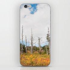 Trees in Mt. Rogers, Virginia iPhone & iPod Skin