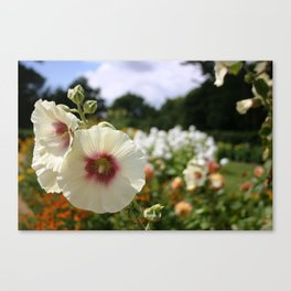 White and Red Hollyhock flower Canvas Print