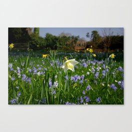 Sring Flower Meadow Canvas Print