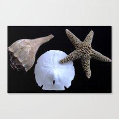 Seaside Relics Canvas Print