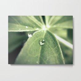 Spring Dew Metal Print
