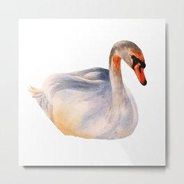 Swan Soliloquy Metal Print