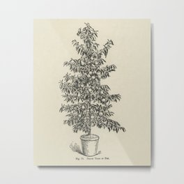 The fruit grower's guide  Vintage illustration of peach 3 Metal Print