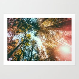California Redwoods Sun-rays and Sky Art Print