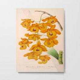 Dendrobium fimbriatum Vintage Botanical Floral Flower Plant Scientific Illustration Metal Print