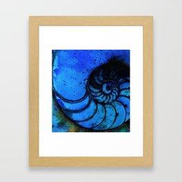 Nautilus Shell No. 987 by Kathy Morton Stanion Framed Art Print