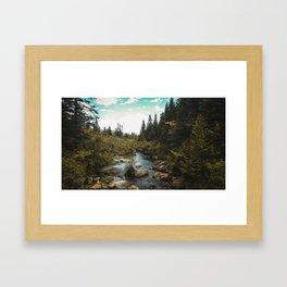Maine Woods Framed Art Print