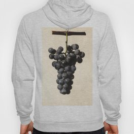 Vintage Concord Grapes Illustration Hoody
