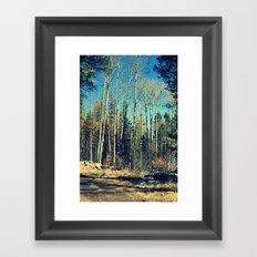 Aspens in Winter  Framed Art Print