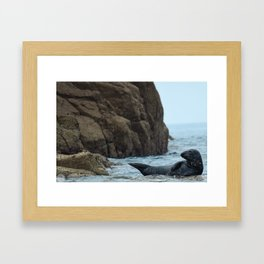 Grey Seal on lookout Framed Art Print