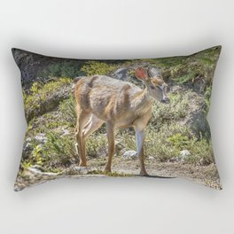 Crossing Paths with a Black-Tailed Deer Rectangular Pillow