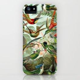 Ernst Haeckel - Artforms in Nature: Trochilidae,1904 iPhone Case