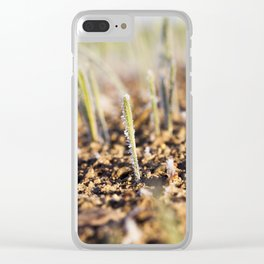 young sprouts close-up of wheat Clear iPhone Case