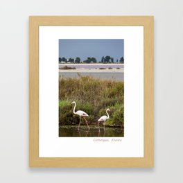 Flamingos in Camargue Framed Art Print