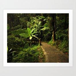 Tropical Forest Path Art Print