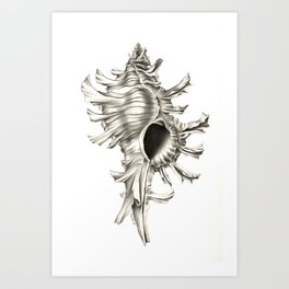 Shell 01 Art Print