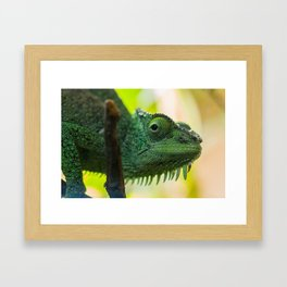 Up Close and Personal with a Chameleon Framed Art Print